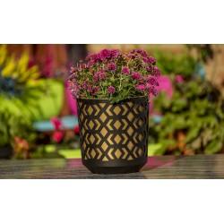 Plant Pots Aztek Black+Gold