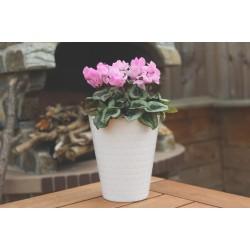 Plant Pots Diamond Orchid  White