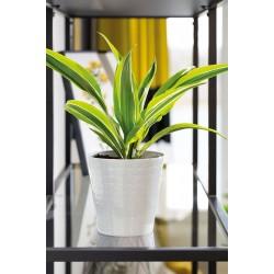 Plant Pots Diamond White
