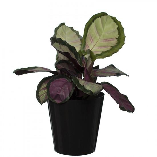 Black Aga Flower Pot