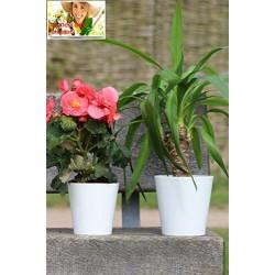 White Aga Flower Pot