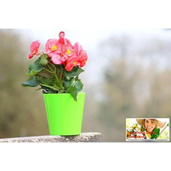 10 Pack-Green Aga Flower Pot