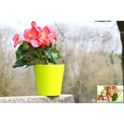 10 Pack-Lime Aga Flower Pot