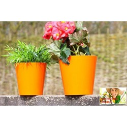 Orange Aga Flower Pot