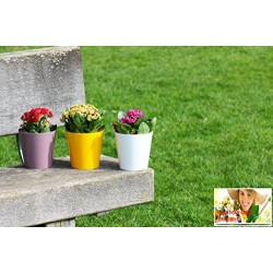 10 Pack-Heather Aga Flower Pot