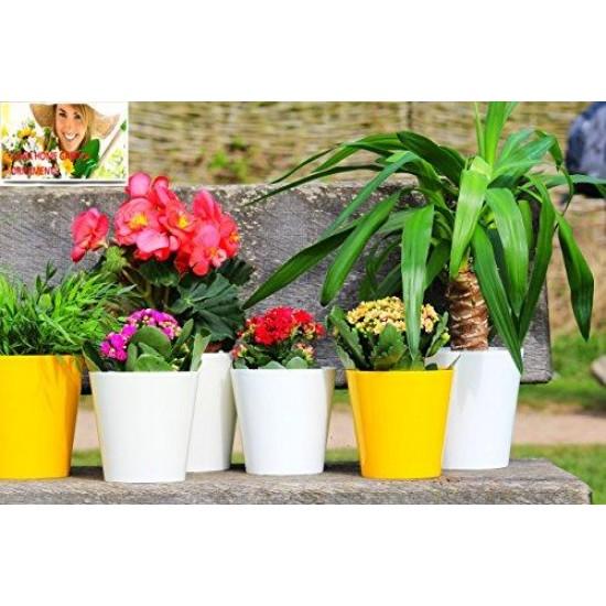 Yellow Aga Flower Pot