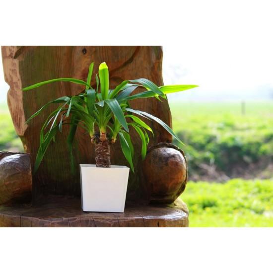 Aga Flower Pots square White