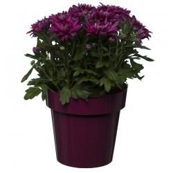Flower Pots Classic Amaranth