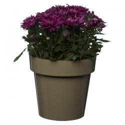 Flower Pots Clasic Beige