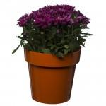 Flower Pots Classic Orange