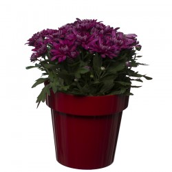 Flower Pots Classic Red