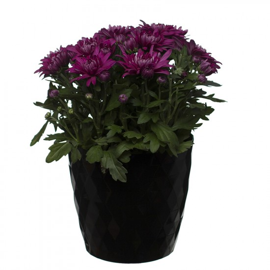 Black Crystal Flower Pot
