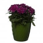 Green Crystal Flower Pot