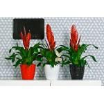 Red Crystal Flower Pot