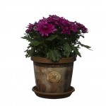 Chocolate Map Keramo Flower Pot