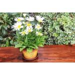 Terracotta Branch Keramo Flower Pot
