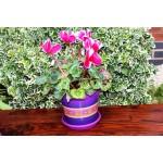 Violet Keramo Flower Pot