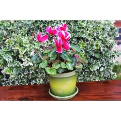 Olive Greek Keramo Flower Pot