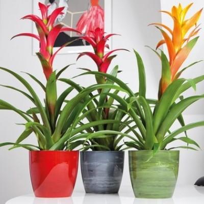 Marble Flower Pots
