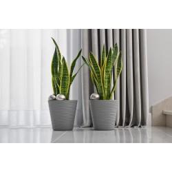 Flower Pots Tedi Grey