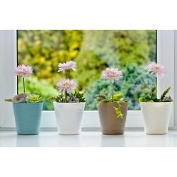 Flower Pots Tedi Beige