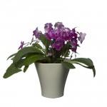 Flower Pots Wave 1-Ecru