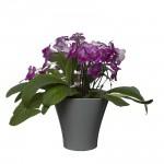 Flower Pots Wave 1-Grey