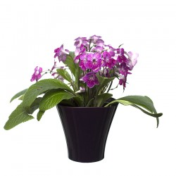 Flower Pots Wave Small -Plum