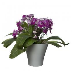 Flower Pots Wave 1-White