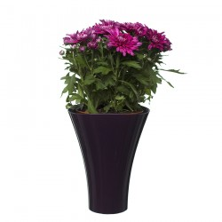 Flower Pots Wave 2-Plum