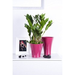 Flower Pots Wave Long-Pink Fuchsia