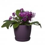 Violet Aga Mat Flower Pot