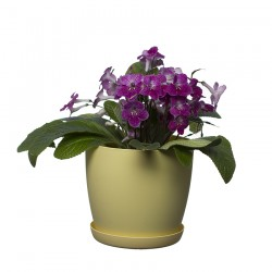 Pastel Aga Mat Flower Pot with Saucer Tray