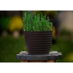 Plant Pots Jersey Anthracite