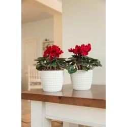 Plant Pots Jersey White