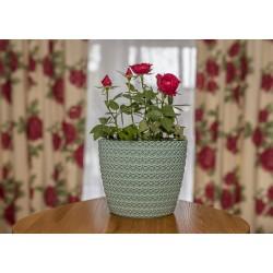 Plant Pots Jersey Mint