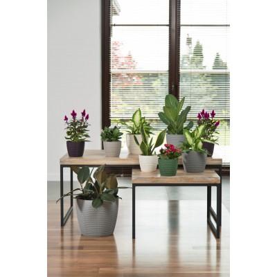 Jersey Plant Pots