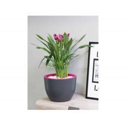 Muna Plant Pots Round anthracite + blueberry