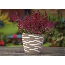Sahara Duo Plant Pot Beige+White