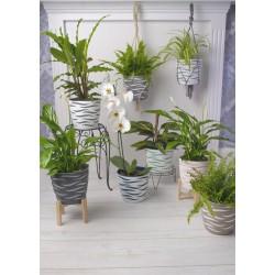 Sahara Duo Plant Pot Concrete+White