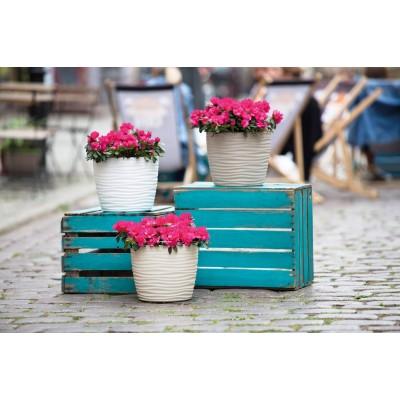 Vito Plant Pots