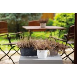Plant Pots Vito White