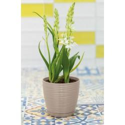 Plant Pots Vito Grey-Beige