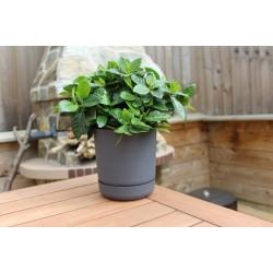 Satina Plant Pots Anthracite