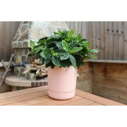 Satina Plant Pots Powder Pink