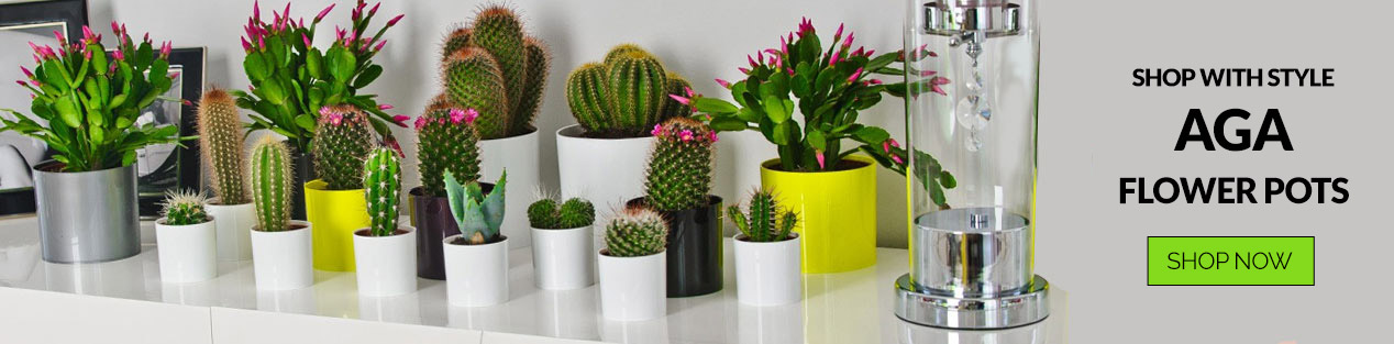 Online Flower Pots Shop