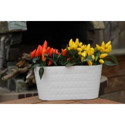 Plant Pots Diamond Oval White