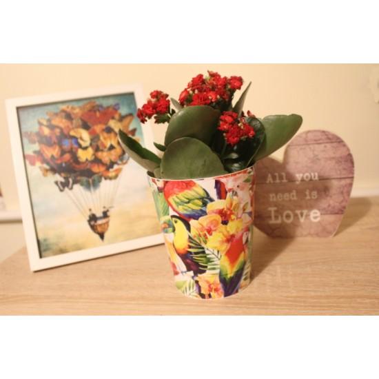 Plant Pots Parrots 13.5 cm