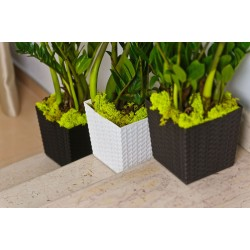 Rattan Brown Flower Pots