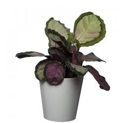 10 Pack-White Aga Flower Pot